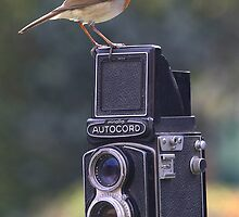Minolta Robin by Norfolkimages