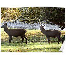 Young Bucks - Red Deer Poster