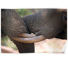 Entwined Tuskers Poster