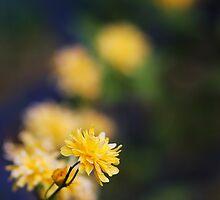 Yellow Reaching Out by BillCMartin