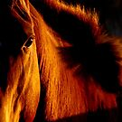 Horses of fiery red by Penny Kittel