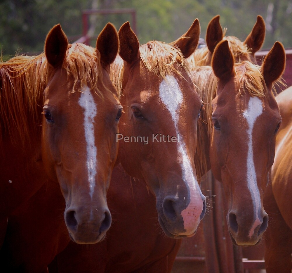 Three of a kind.. by Penny Kittel