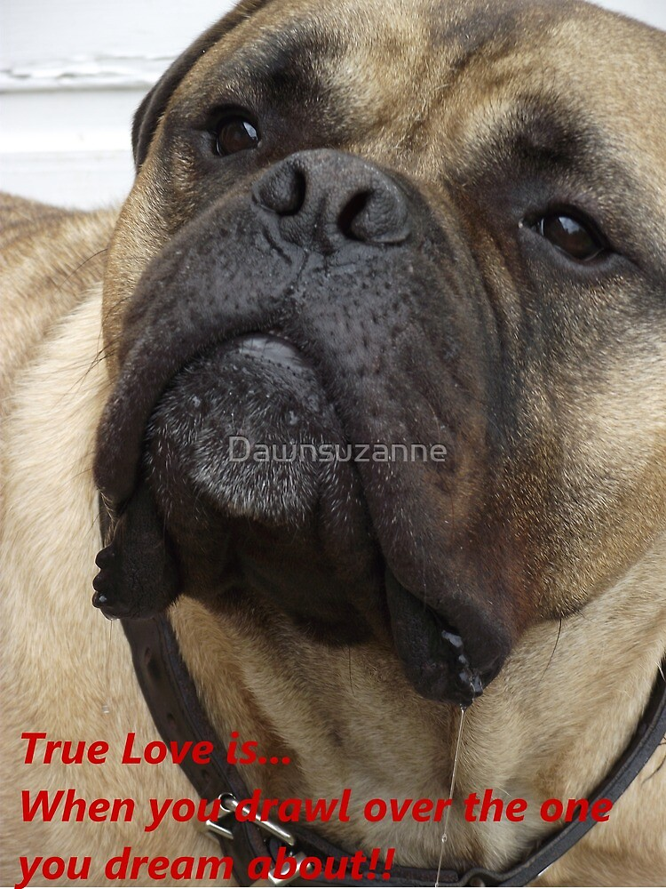True Love 4 Dogs Face by Dawnsuzanne