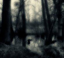Woodland 3 by Paul Ridley
