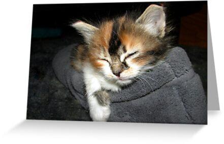 Asleep in a Slipper by down23