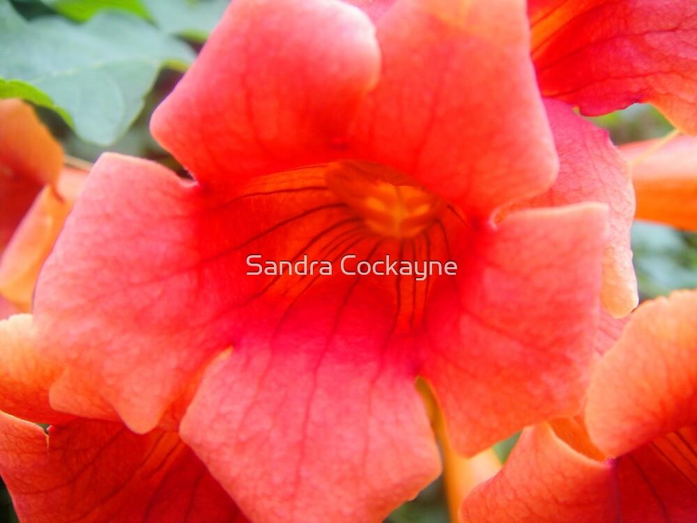 Blazing Orange..... by Sandra Cockayne