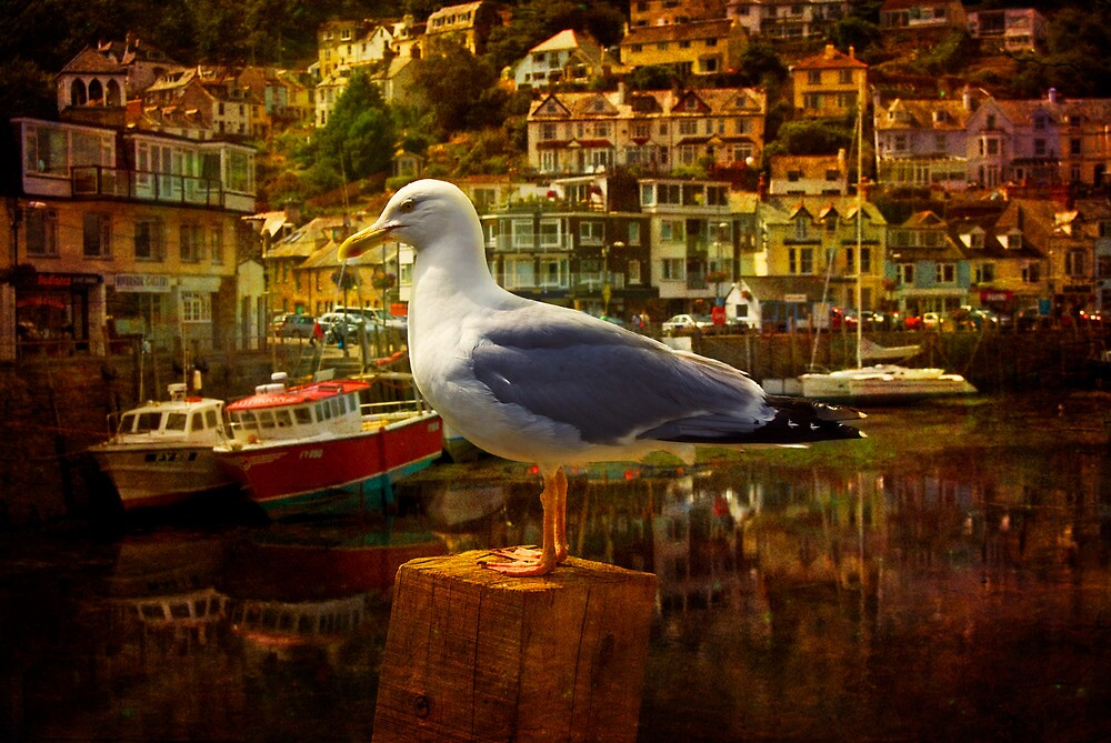 Bird at Looe by ajgosling