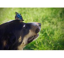 Toby's Butterfly Photographic Print
