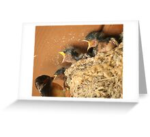 Feed Me! Feed Me! Barn Swallow Babies Greeting Card