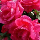 3 Roses by Michael Beckett
