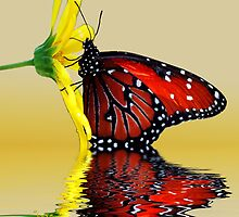 Butterfly Reflection by George Lenz