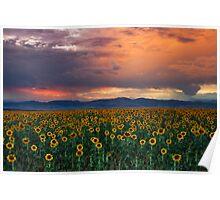 God's Sunflower Sky Poster