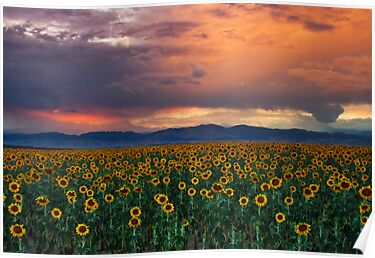God's Sunflower Sky by John  De Bord Photography