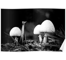 Fungi - Mixenden, Halifax, UK Poster