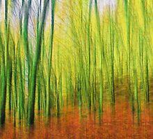 Rainy autumn colors by Benjamin Gelman
