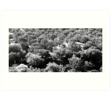 olive grove on lesvos Art Print