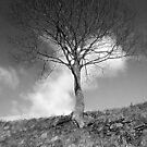Lonesome tree - Mixenden, Halifax, UK by Andy Beattie