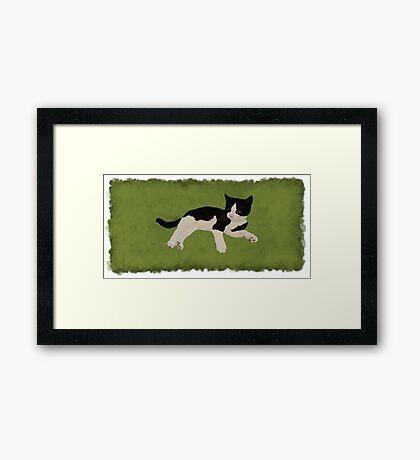 Zorro Kitten - Green Framed Print