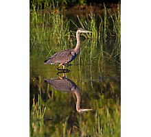 Young Heron Photographic Print