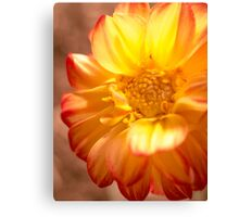 Orange Lemonade Dahlia Canvas Print