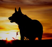 Kelpie sunset Sticker