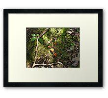 orange fungus Framed Print