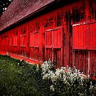 Red Barn Windows - Madison, WI by Tara Wagner