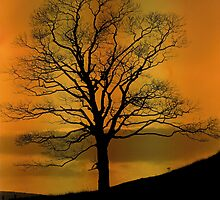 Sunset Sycamore - Mixenden, Halifax, UK by Andy Beattie