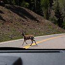 Oh, deer! by Gili Orr