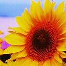 Sunflower at Beach by schiabor