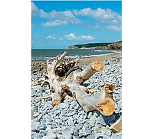 Washed Up Tree Photographic Print