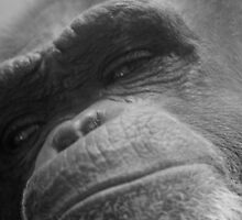 Primate In Thought by Thomas Byron