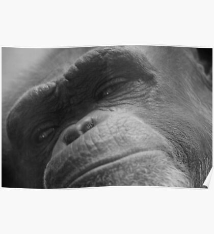Primate In Thought Poster