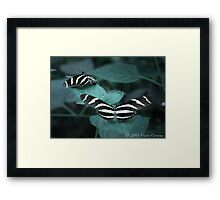Zebra Longwing Butterflies Framed Print