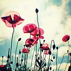 Pink Poppies by Joshua Greiner