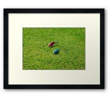 Pair of colourful parrots in Buenos Aires Framed Print