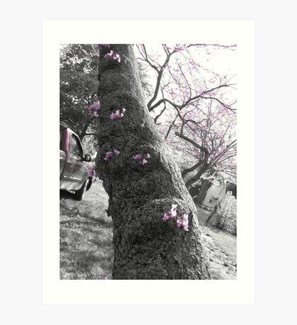 buds on a tree Art Print