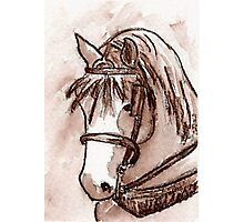 Draft Horse in Sepia Photographic Print