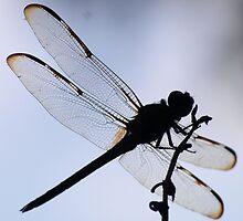 silhoutte of a dragonfly by jdadkin