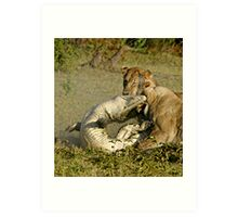 Nature:lion-crocodile interaction ( A once in a life time experience!) Art Print