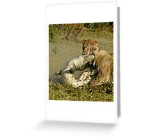 Nature:lion-crocodile interaction ( A once in a life time experience!) Greeting Card