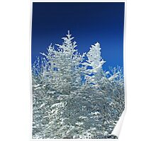 Snow Blasted Trees Poster