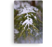 Snowy Fir Bough Canvas Print