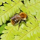 Fern & Bee by AnnDixon