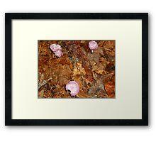purple fungus  Framed Print
