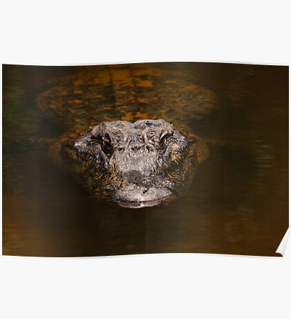 Everglades Alligator Poster