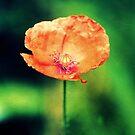 Paper Flower by Carrie Bonham
