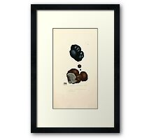Coloured figures of English fungi or mushrooms James Sowerby 1809 0429 Framed Print