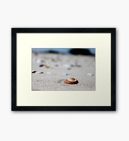 Sandy Snail Shells Framed Print