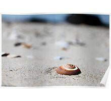 Sandy Snail Shells Poster